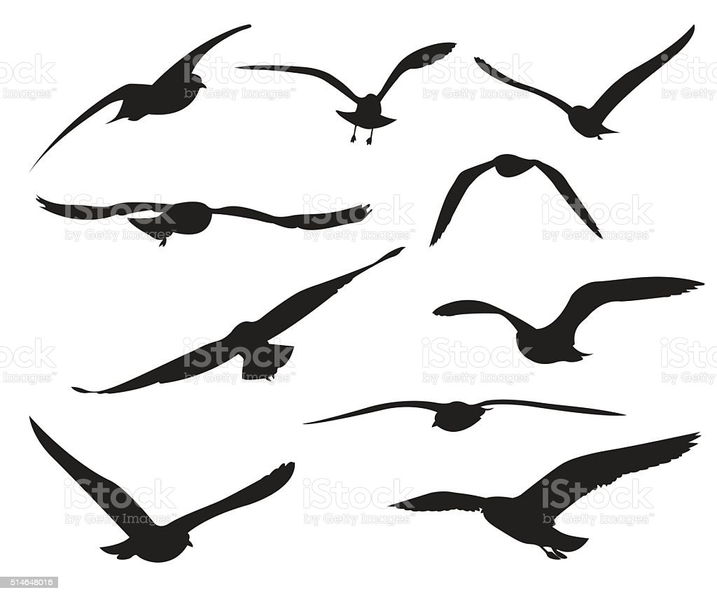 Seagull Set Silhouettes on the white background vector art illustration