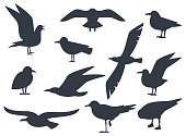 Seagull silhouette set isolated on white background vector. Set flying seagull. Black birds on a white background.