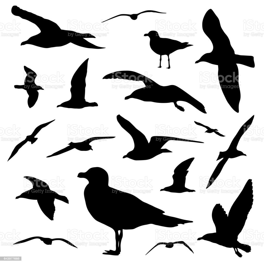 Seagull silhouette set isolated on white background vector vector art illustration