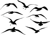 A vector silhouette illustration of multiple images of seaguls standing, walking, flying, and preparing to fly.