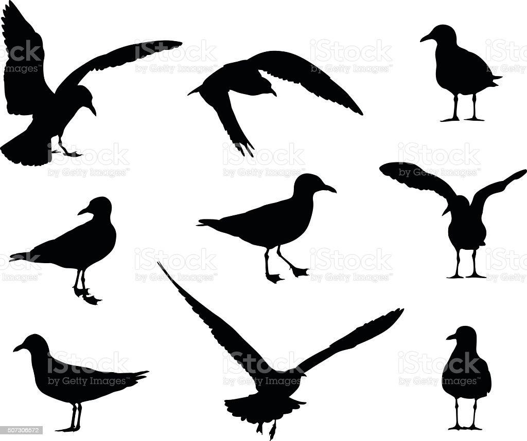 Seagull Silhouettes vector art illustration