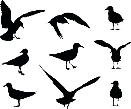 Seagull Silhouettes Stock Illustration - Download Image ...