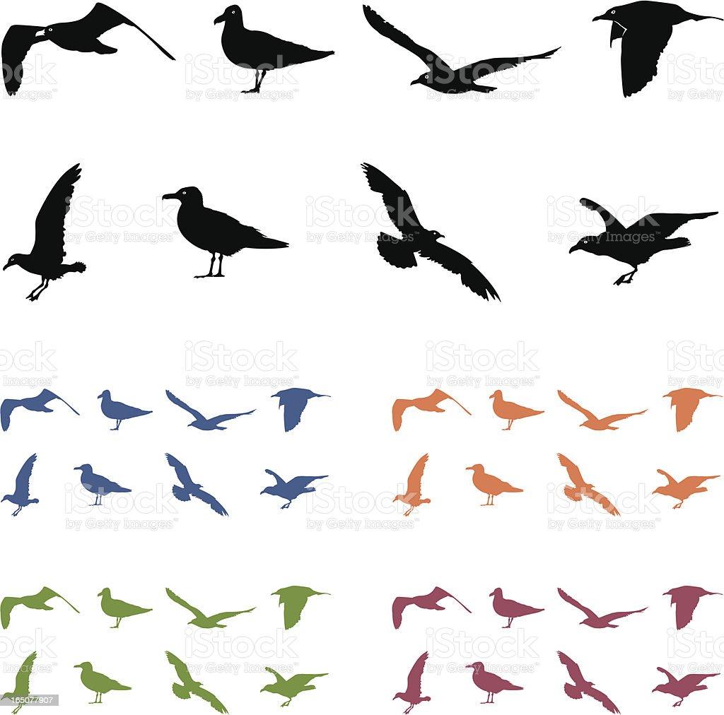 Seagull Silouhettes vector art illustration