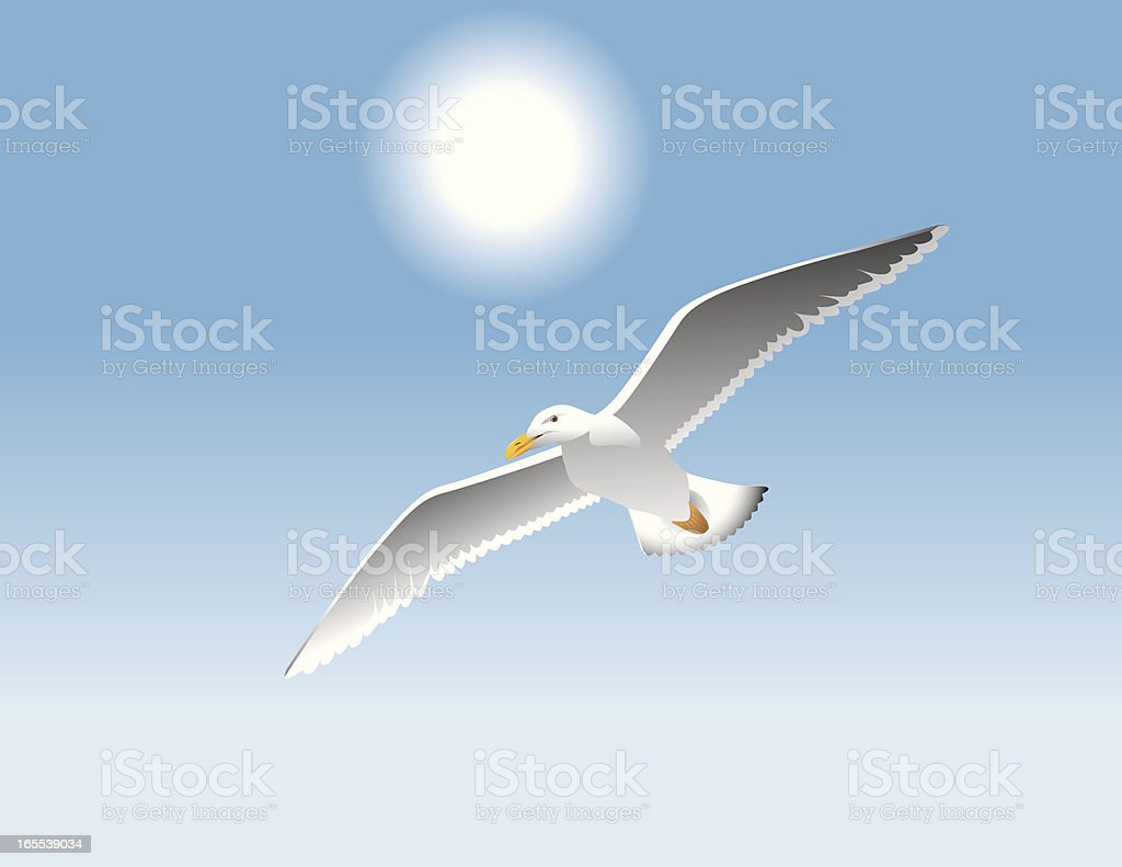Seagull vector art illustration