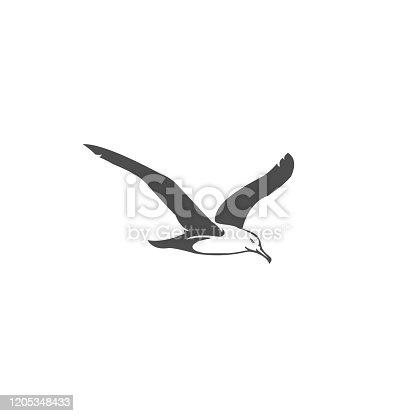 istock seagull vector illustration 1205348433