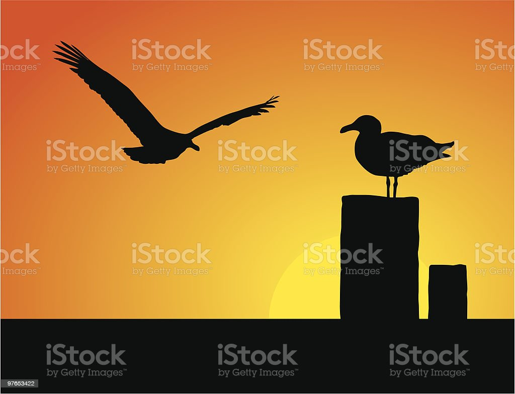 Seagulls at sunset with shadows on the pier life vector art illustration