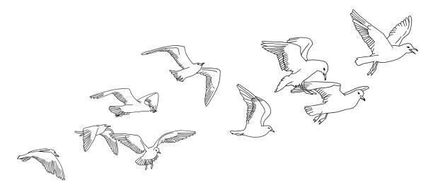 Seagulls banner vector art illustration