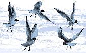 seagull; bird; sea; flight; movement; target; business; equipment; technology; wings