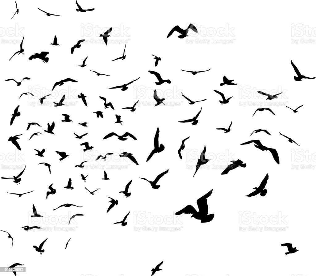 Seagulls black silhouette on isolated white background. Vector vector art illustration