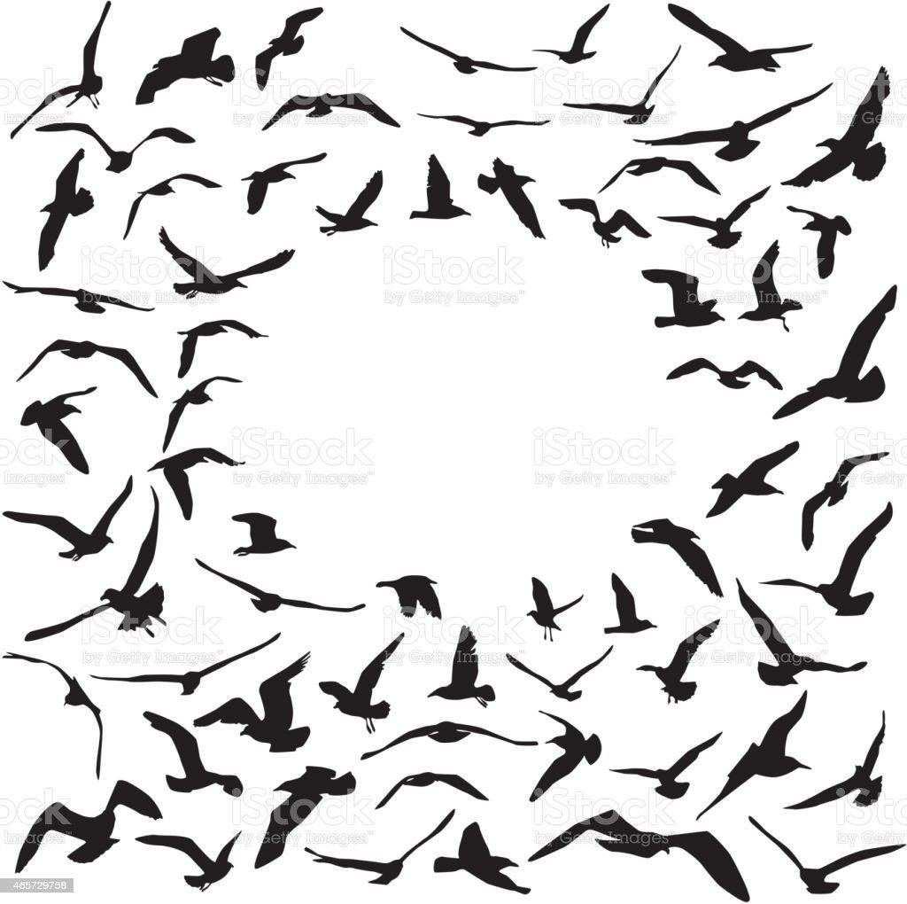 Seagulls black silhouette on white background. Card design. Vector vector art illustration