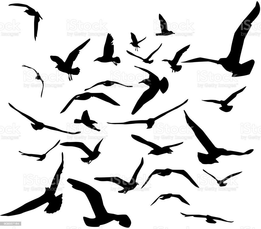 Seagulls black silhouette on white background. Vector vector art illustration