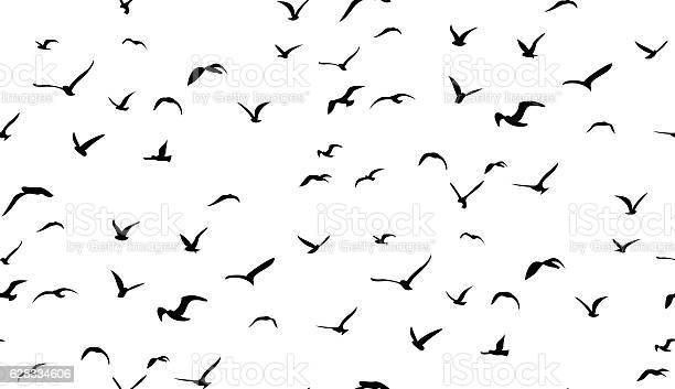 Seagulls flying in the sky seamless vector pattern vector id628334606?b=1&k=6&m=628334606&s=612x612&h=f8gz192qowwhgmujo4bl5zryo7ymcnb2p4aun0xerpq=