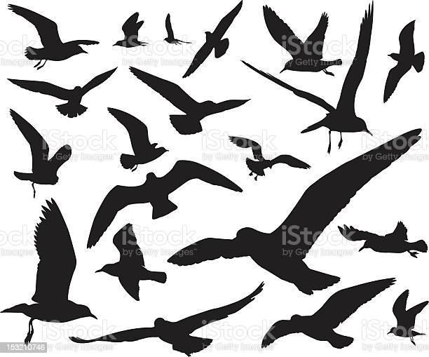 Seagulls silhouettes vector id153210746?b=1&k=6&m=153210746&s=612x612&h=2f h4520gnjrtqdx n700usgndj0isg0kxibzbli9mi=