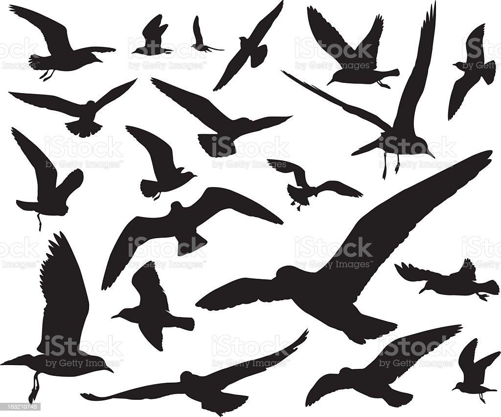 Seagulls silhouettes vector art illustration