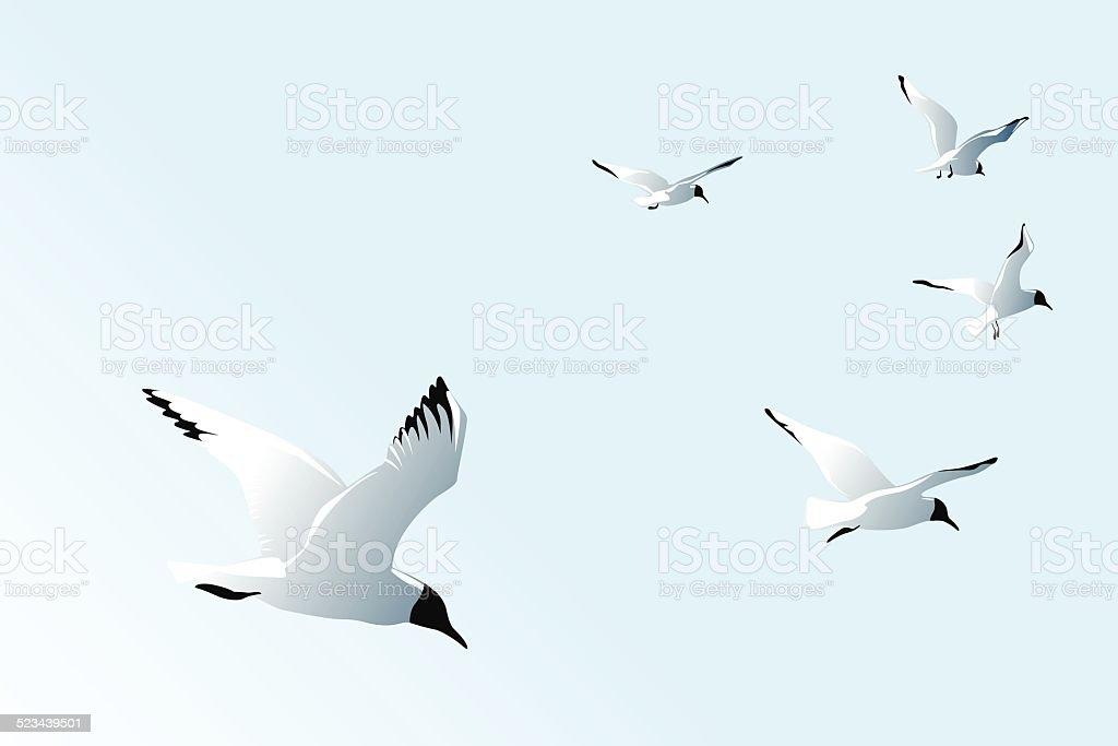 seagulls vector art illustration