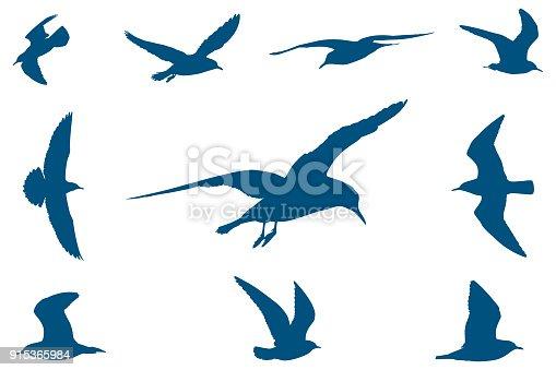 istock Seagulls 915365984