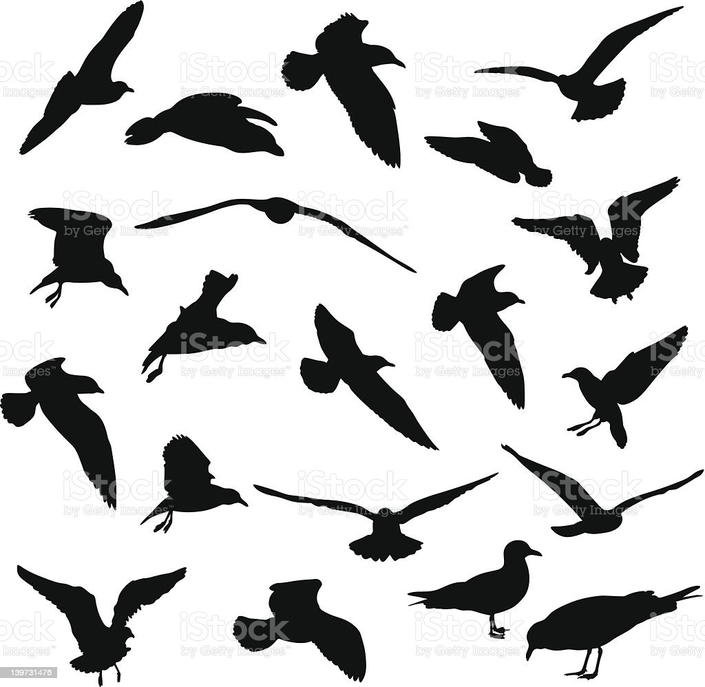 Seagulls vector silhouettes royalty-free stock vector art