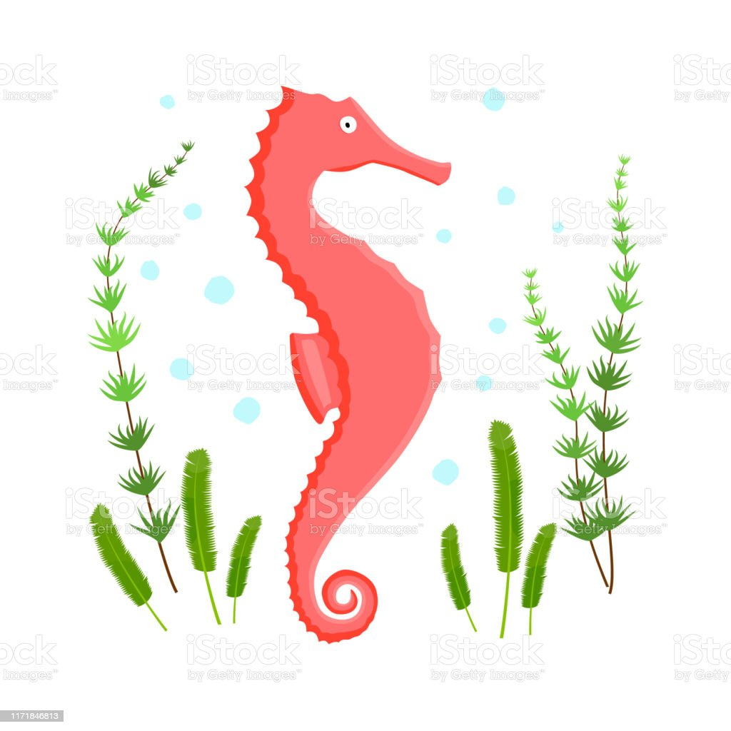 Seahorse Character With Spots And Algae On White Background Stock Illustration Download Image Now Istock