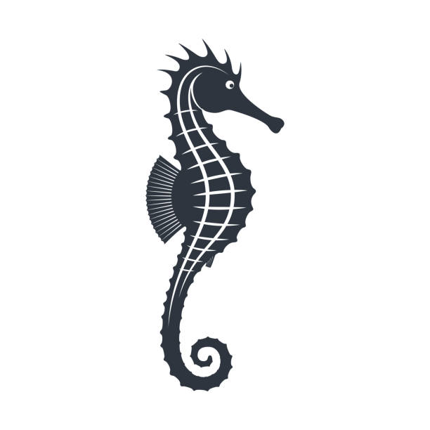 Seahorse sign Seahorse graphic icon. Sea life symbol. Black silhouette seahorse isolated on white background. Tattoo. Logo. Vector illustratio sea horse stock illustrations