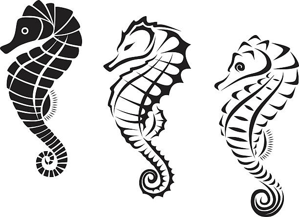 4826021ad Top 60 Sea Horse Clip Art, Vector Graphics and Illustrations - iStock