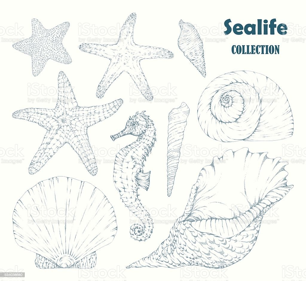 Sealife collection. vector art illustration