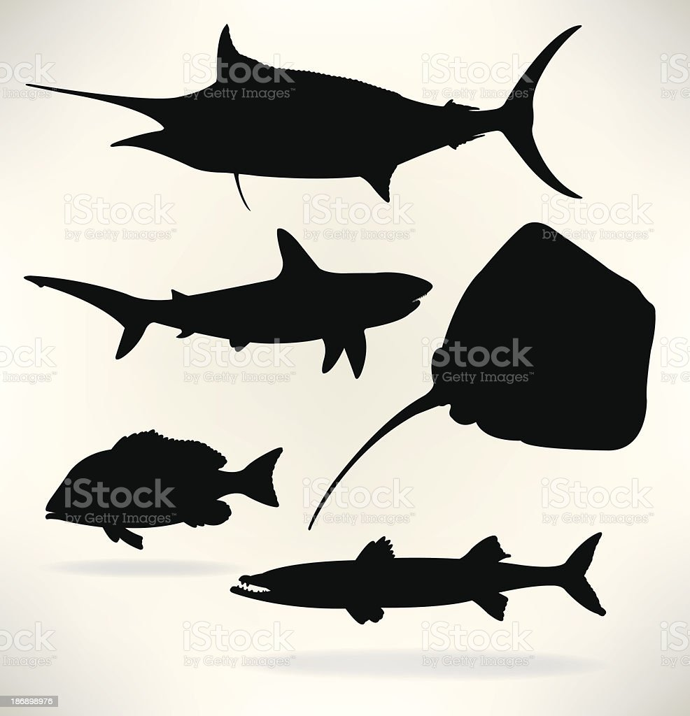 Sealife- Saltwater fish, Shark, red snapper, sailfish, barracuda vector art illustration