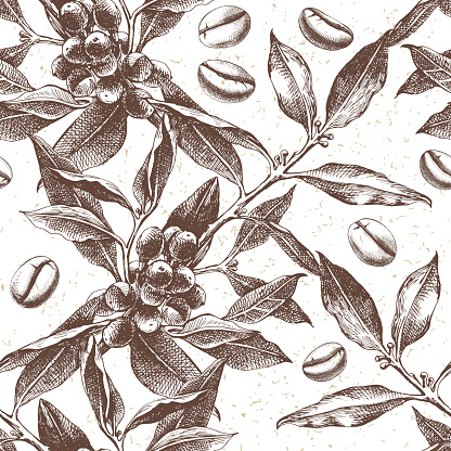 Seamles pattern with coffee plant and beans clipart