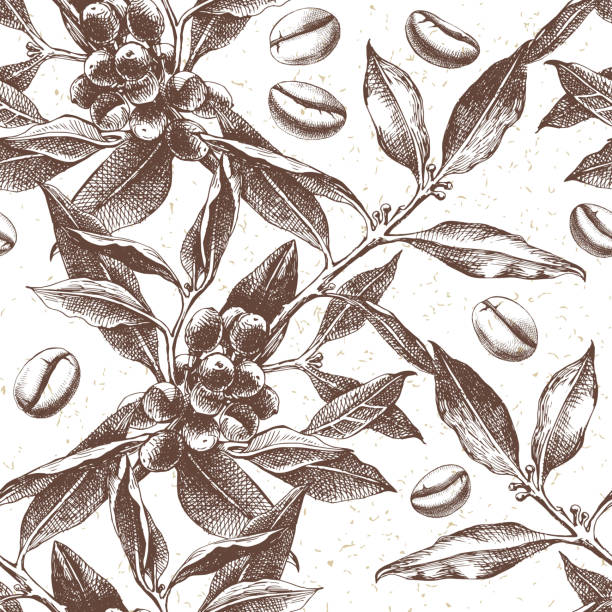 seamles pattern with coffee plant and beans - coffee stock illustrations