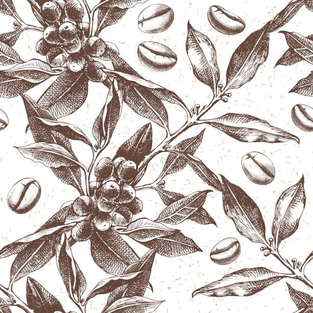 illustrazioni stock, clip art, cartoni animati e icone di tendenza di seamles pattern with coffee plant and beans - caffè