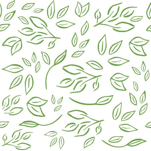 ilustrações, clipart, desenhos animados e ícones de padrão sem emenda e fresco com ramos, folhas para orgânicos labe - textura de folhas