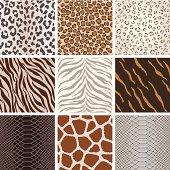 A collection of animal background pattern, based on Leopard, Jaguar, Tiger, Giraffe, zebra,  crocodile skin, etc.  All design are seamless.