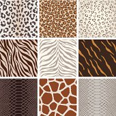 Seamless animal background pattern