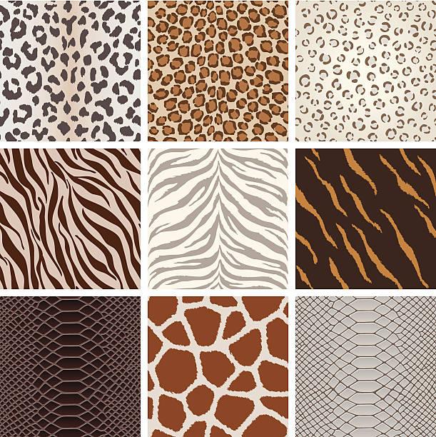 Seamless animal background pattern A collection of animal background pattern, based on Leopard, Jaguar, Tiger, Giraffe, zebra,  crocodile skin, etc.  All design are seamless. animal markings stock illustrations