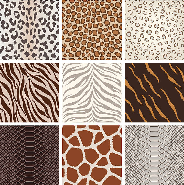 Seamless animal background pattern A collection of animal background pattern, based on Leopard, Jaguar, Tiger, Giraffe, zebra,  crocodile skin, etc.  All design are seamless. animal markings stock illustrations