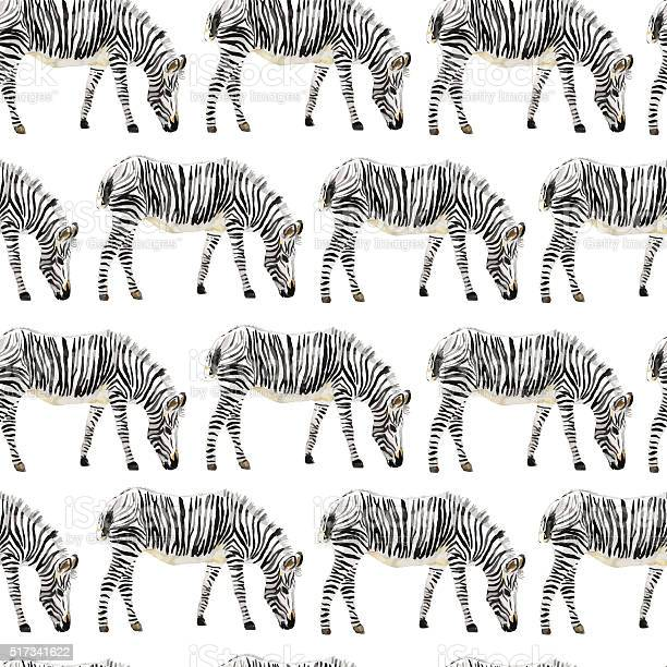 Seamless animal pattern with zebra drawn watercolor vector id517341622?b=1&k=6&m=517341622&s=612x612&h=o0od9xdtwjewksicvfhiwrez8gm4bdhvzcncf8vdtto=