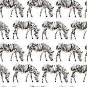 Seamless animal pattern with zebra drawn watercolor