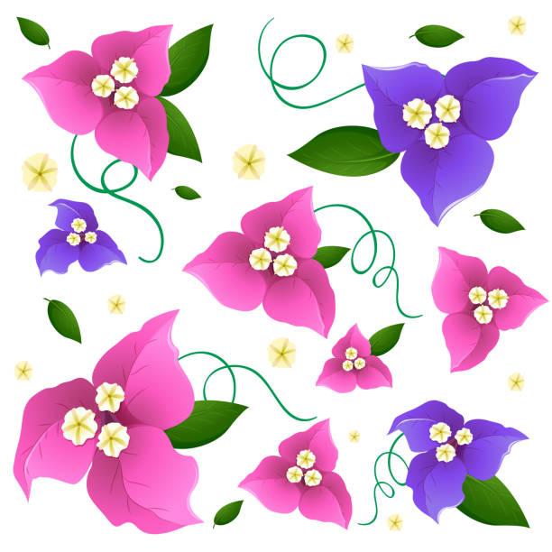 Diseño de fondo transparente con flores de colores en rosa y morado - ilustración de arte vectorial