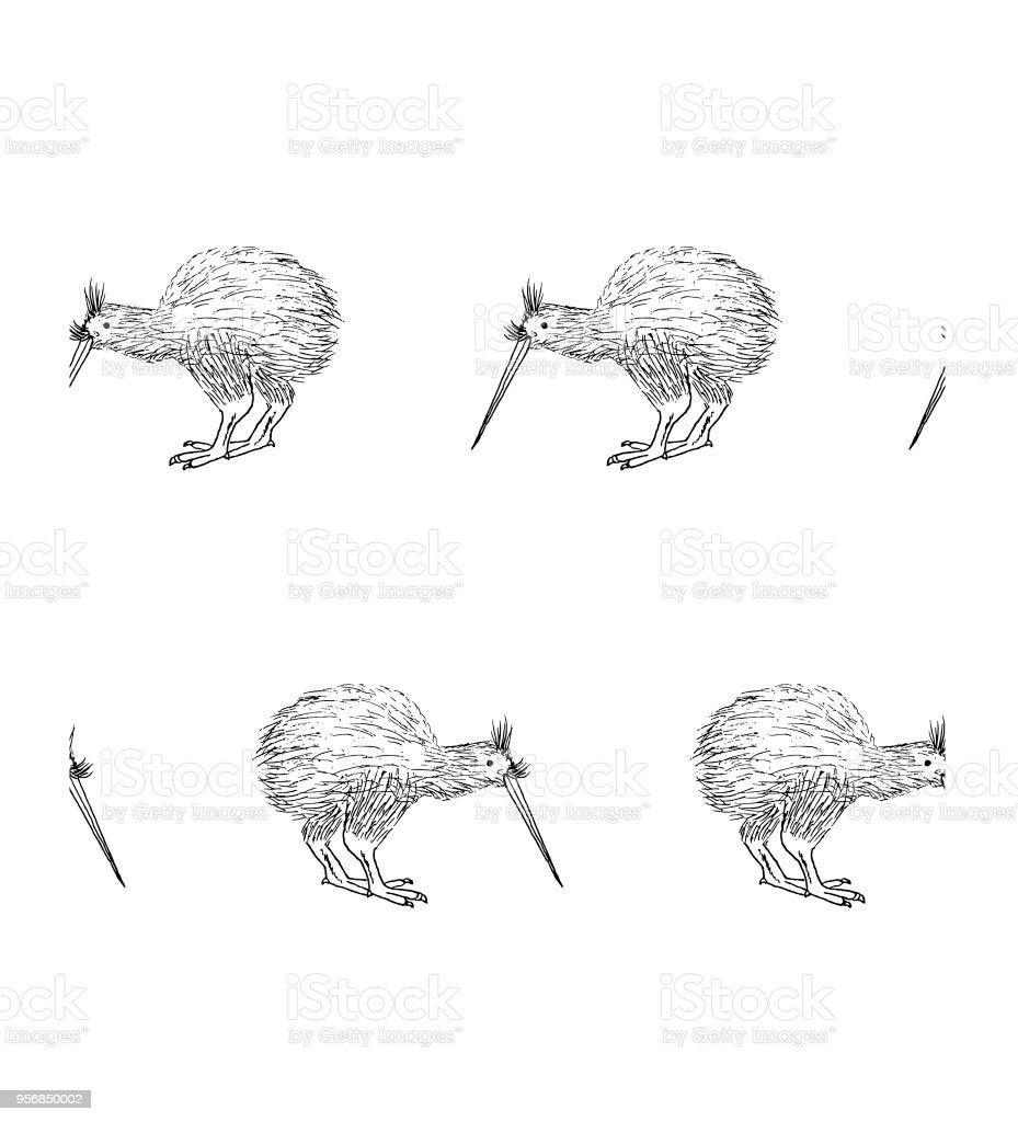 Ilustracion De Dibujo De Kiwi De Fondo Transparente Mano Tinta