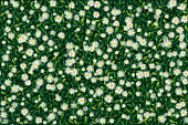 Meadow with green leaves and white daisy flowers viewed from above. The eps file is organised into six layers for the background, the back and front leaves, the back and front flowers and some shadows. You can mass edit the eps file elements because they come from eight editable symbols. This illustration is designed to make a smooth seamless pattern if you duplicate it vertically and horizontally to cover more space.