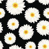 Vector illustration of seamless background with white daisy flowers on a black background.