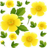 Seamless background with yellow buttercup flowers illustration