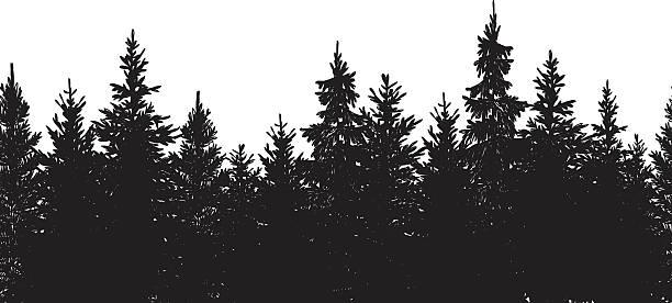bildbanksillustrationer, clip art samt tecknat material och ikoner med seamless black forest background - ädelgran