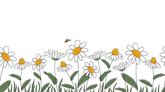 Seamless border of daisies