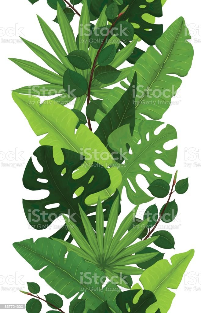 Seamless Border of Monstera, Banana, Ficus and Palm Leaves royalty-free seamless border of monstera banana ficus and palm leaves stock illustration - download image now