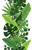 Seamless Border of Green Monstera, Banana, Ficus and Palm Leaves