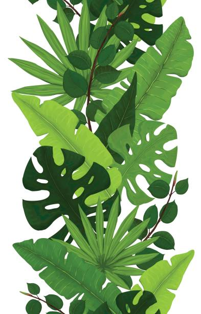 seamless border of monstera, banana, ficus and palm leaves - palm tree stock illustrations