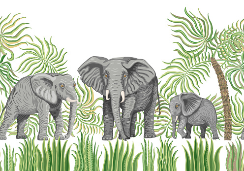 Seamless border pattern of vector savannah safari animals. African elephants, palm tree leaves, grass, herbs, bush isolated on a white background