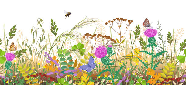 Seamless Border with Autumn Meadow Plants and Insects Seamless horizontal border with autumn meadow plants and insects. Floral pattern with fading grass, colorful wild flowers in row, bumblebee and butterflies on white background. bee borders stock illustrations