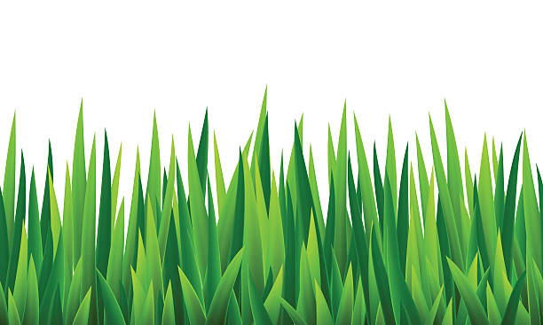 stockillustraties, clipart, cartoons en iconen met seamless border with grass and flowers - grasspriet