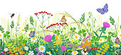 Seamless horizontal border with summer meadow plants and insects. Green grass, colorful wild flowers, bumblebees and butterflies on white background. Floral natural pattern vector flat illustration.